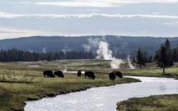[손민호 기자의 레저 터치] 미국 국립공원 100주년, 전 세계가 기념하는 이유