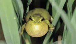 개구리·재두루미 보호 요구에…수도권 제2순환로 덜커덩