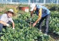 봉사도 직업…텃밭 가꾸기 도와주다 도시농업전문가로