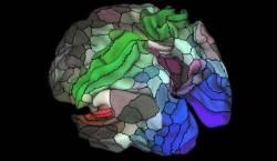 기억과 언어 담당하는 인간 뇌지도 그렸다