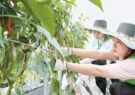 [시선집중] 농번기 농가 일손 돕기, 6차산업 컨설팅 … 농촌과 상생에 앞장