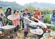 """[반퇴 시대 인생 이모작] 좌충우돌 초보 농부들 """"가물었을 때 물 안 줘 오이가 써요"""""""