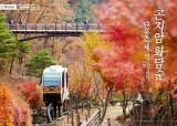 [주말 여행 어디 갈까] 곤지암 화담숲 단풍축제 가는 길