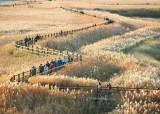 [11월 다이어리] 가을이 속삭이는 순천만 갈대밭
