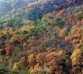 [커버스토리] 41년만에 풀린 봉인…총천연색 '비밀의 숲'