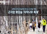 [주말 여행 어디 갈까] 곤지암 화담숲 '자작나무 축제'