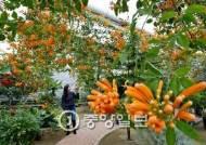 [서소문 사진관] 미리 만나는 봄… 카메라 하나 들고 식물원 여행하기