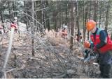 드론 띄워 재선충병 조기 발견 ··· 백두대간 소나무숲 보호