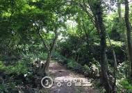 제주도, 오름·곶자왈 국립공원 지정 추진