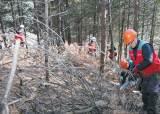[라이프 트렌드] 드론 띄워 재선충병 조기 발견…백두대간 소나무숲 보호