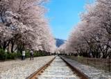 [THIS WEEK] 내일부터 진해군항제 … 여좌천·경화역 <!HS>벚꽃<!HE> 장관
