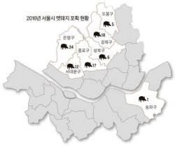 [<!HS>현장<!HE> <!HS>속으로<!HE>] 도시물 먹은 북한산 멧돼지, 개 무서워 않고 불빛도 안 피해