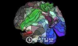 미 MIT연구팀, 뇌 속 장기기억 생성 과정 처음으로 밝혔다