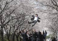 [서소문 사진관]아시아나항공 신입사원들 벚꽃하늘을 날다.