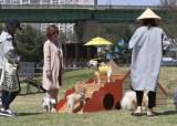 [뉴스 속으로] 영국선 195년 전 동물복지법, 한국선 아직도 '강아지 공장'