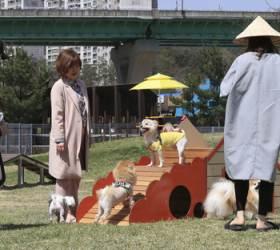 [<!HS>뉴스<!HE> <!HS>속으로<!HE>] 영국선 195년 전 동물복지법, 한국선 아직도 '강아지 공장'