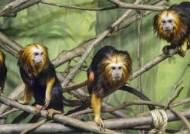 타마린 원숭이는 지금이 사춘기