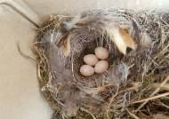종이박스에 둥지 튼 딱새가족, 새끼 6마리 부화해 자연의 품으로