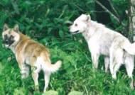 소·닭 잡아먹는 유기견…갈 곳 잃은 '맹수'되어 마을 습격