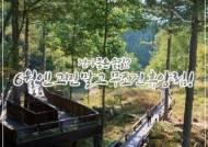 [카드뉴스]걷기 좋은 숲길? 고민 말고 무조건 휴양림