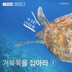 [<!HS>반퇴시대<!HE> <!HS>카드뉴스<!HE>] 거북목을 잡아라 ①