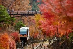 화담숲, 가을 단풍축제 예약 받는다