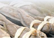 [라이프 트렌드] 수산물 생산·유통·가공 경로 꼼꼼히 추적한 '안전한 밥상'