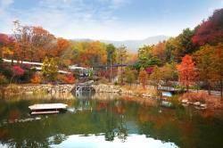 곤지암 화담숲, 가을 야생화 소풍전 개최