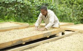 더 강렬하게, 더 달콤하게…커피 고향의 맛 살린다