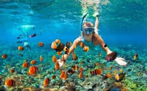 가을엔 바다로 가겠어요…단풍보다 화려한 산호 보러