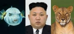 [백재권의 관상·풍수83] '겁 없는 복어상' 김정은 위원장은 서울에 온다