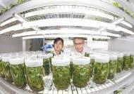 [월간중앙 현장이슈] 식탁 벗어난 GMO(유전자변형식품) 유해 논쟁
