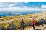 [가을, 대구로 떠나요] 억새밭 장관 이루는 비슬산 … 오르다보면 어느새 '가을 신선'