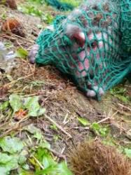 바나나도 본체만체하던 원숭이 3일 만에 포획