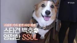 50만 팬 거느린 스타견(犬) 웰시코기 백호를 만나봤습니다