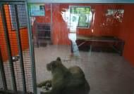 [권혁주 논설위원이 간다]아기 원숭이에게 '천적' 뱀 들이대는 대한민국 동물원