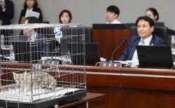 국감장에 울려퍼진 '야옹'…김진태가 국감에 고양이 데려온 사연