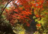 붉게 물든 설악산 정상, 중턱까지 단풍 길 이어져