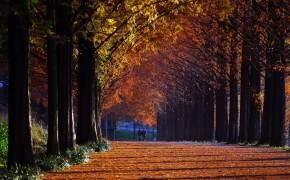 담양원림 송광사 선재길…이 가을 최고의 단풍놀이