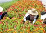 [행복한 마을] 지속적인 환경 정화 … 오지마을이 연 2만 명 찾는 힐링명소로