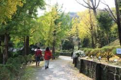 [레저 브리핑] 세종 베어트리파크 '단풍낙엽 산책길' 오늘부터 개방