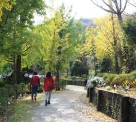 [<!HS>레저<!HE> 브리핑] 세종 베어트리파크 '단풍낙엽 산책길' 오늘부터 개방