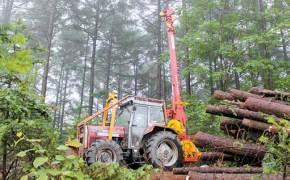 [라이프 트렌드] 나무 베면 나쁘다? 사람도 숲도 유익한 벌채 있어요