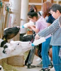 [<!HS>맛있는<!HE> <!HS>도전<!HE>] 70가족 초청해 1박2일 유기농 목장 체험 진행