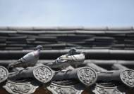 외래종에 밀린 양비둘기 등 멸종위기 25종 10년 내 복원한다