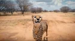 아프리카 야생·'어벤져스'…드론 촬영 고수가 제주도 온 이유