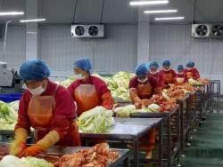 김치 무역적자 520억 … 한국, 중·일 맞서 다시 뛴다