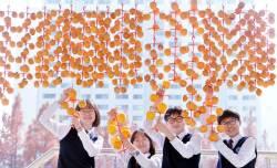 [서소문사진관] 곶감이 주렁주렁, 대전 관저중학교 가을풍경
