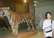 [소년중앙] 큰 나무, 이끼 공룡 사이 지나 호랑이·곰 만났어요