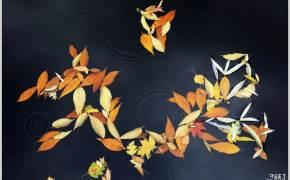 [조용철의 마음 풍경] 낙엽의 수다